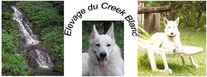 Berger Blanc Suisse en Calédonie