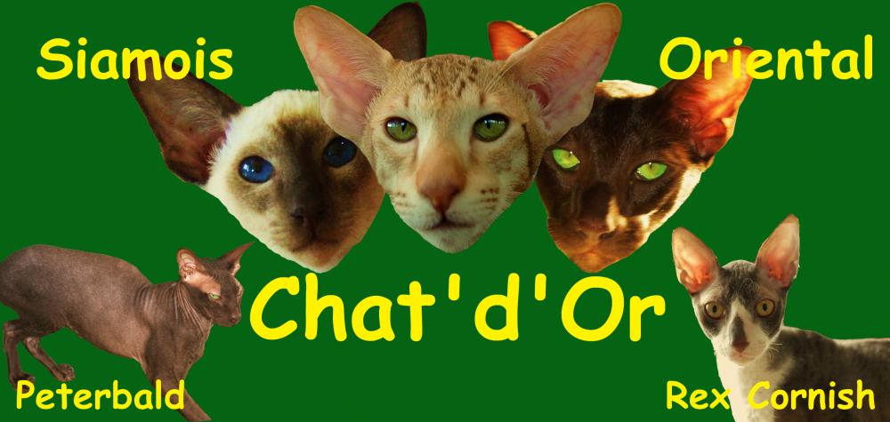 Chat'd'Or