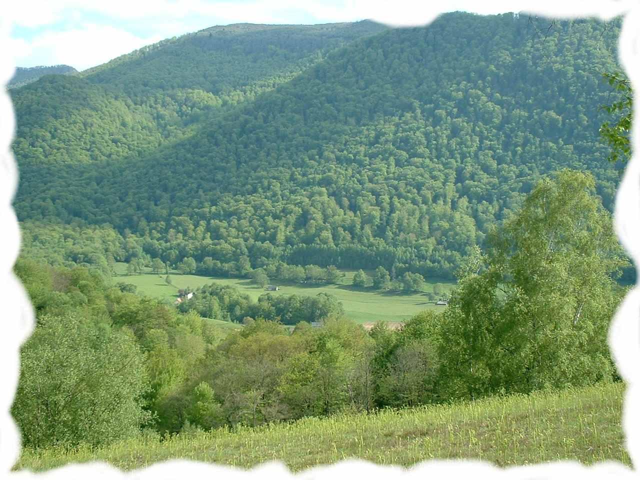 Gite et chambre à l'orée de la forêt du bager d'Oloron