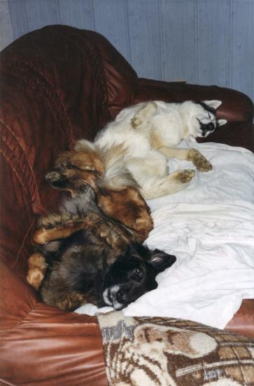 mes chiens de canapé