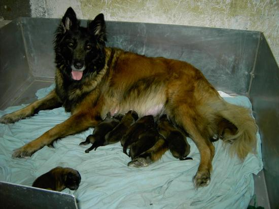 princesse et les bébés d ugues