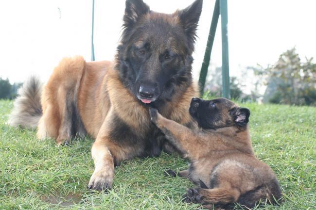 anouk et un bébé d urka