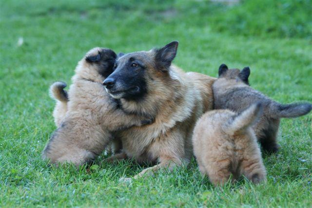 amira et ses bébés