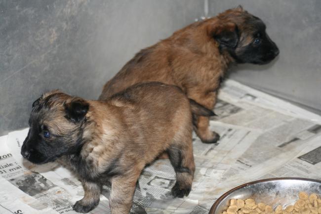 les bébés d anouk