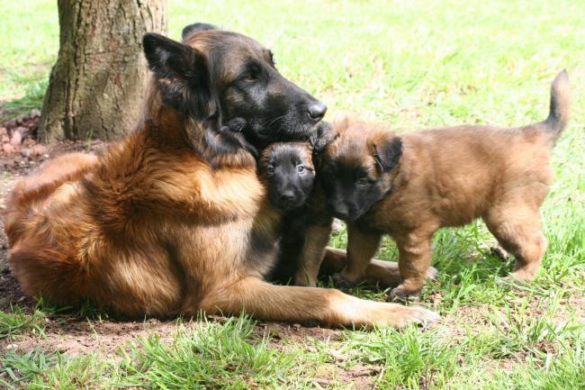 anouk et ses bébés