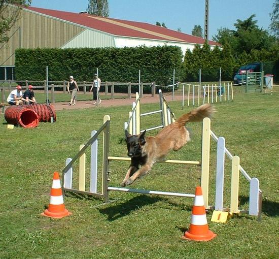 urka en concours d agility