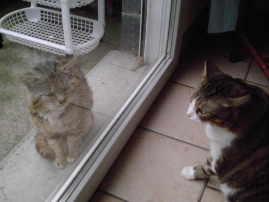 Chipie et Chalet se regardent