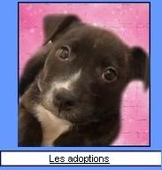 Les adoptions