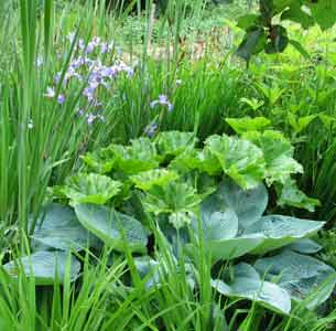 Plantes toxiques for Plante toxique chien