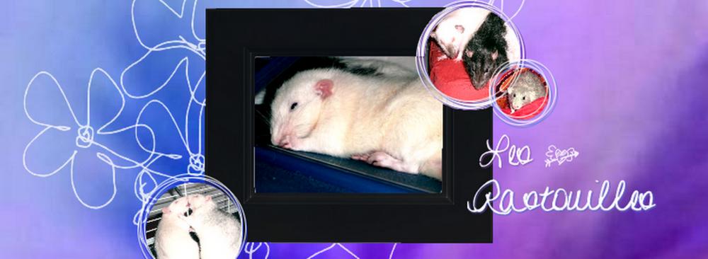 Les Rastouilles et informations sur le rat domestique