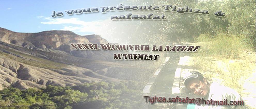 Bienvenus chers amis à SAFSAFAT et TIGHZA