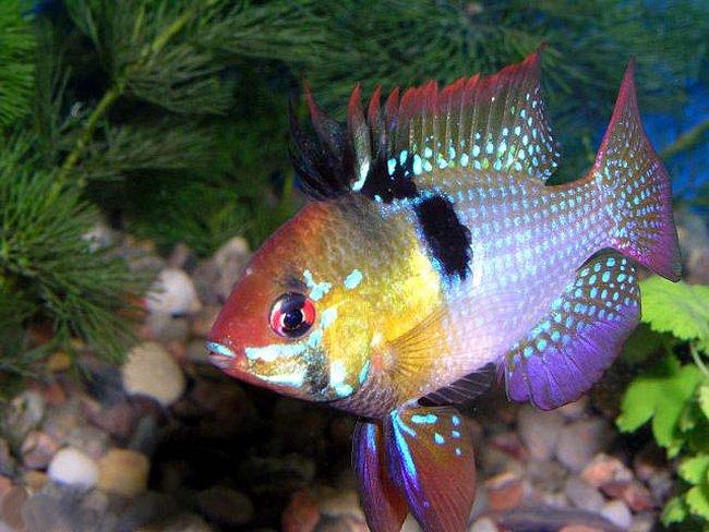 И если хотите еще красивых рыбок, то...  Это небольшие рыбки 5 см...