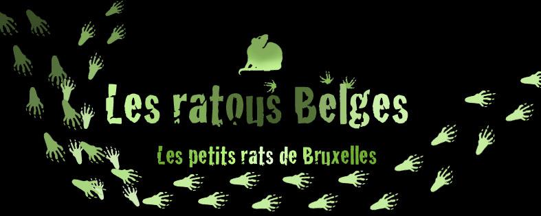 les rats tous Belges