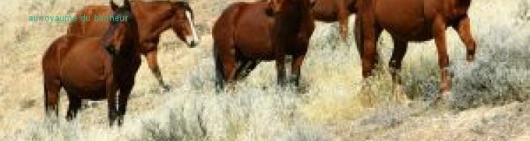 le royaume du bonheur à cheval