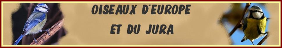 Oiseaux d'Europe et du Jura de GmJ5555