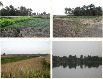Land for sale near the Nile