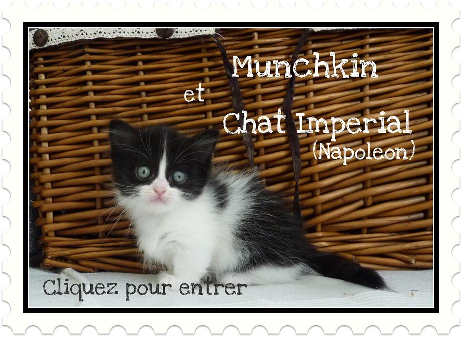 chatterie napol on chatterie munchkin. Black Bedroom Furniture Sets. Home Design Ideas