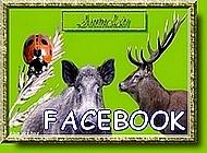 Alain des Bois sur Facebook