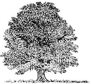Arbres fruitiers et sapin ect abattage d arbres nettoyage de cours et