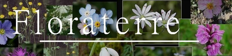 Floraterre