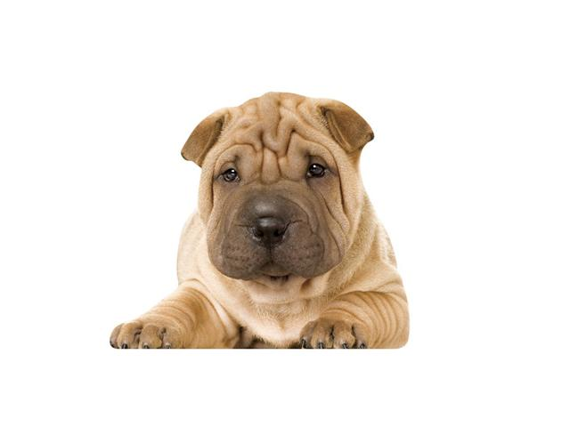 http://www.e-monsite.com/s/2008/07/16/veterinaire-ledoux//22595918oeil-de-chien-4-jpg.jpg