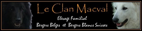 Elevage du Clan Macval