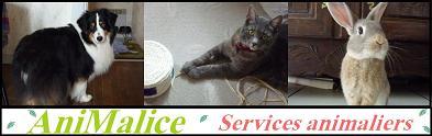 AniMalice, services animaliers