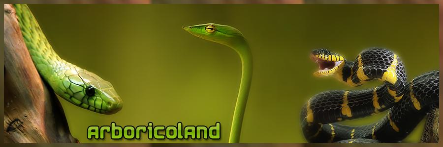 Arboricoland