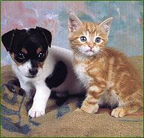 Vétérinaire : Informations sur ce travail et sur les animaux !