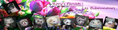 Rory's Ferrets les Bibounour's