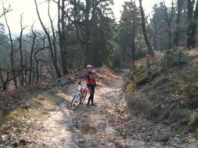 Les renards en forêt de Fontainebleau
