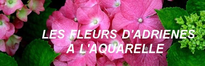 aquarelles fleurs d'Adrienes