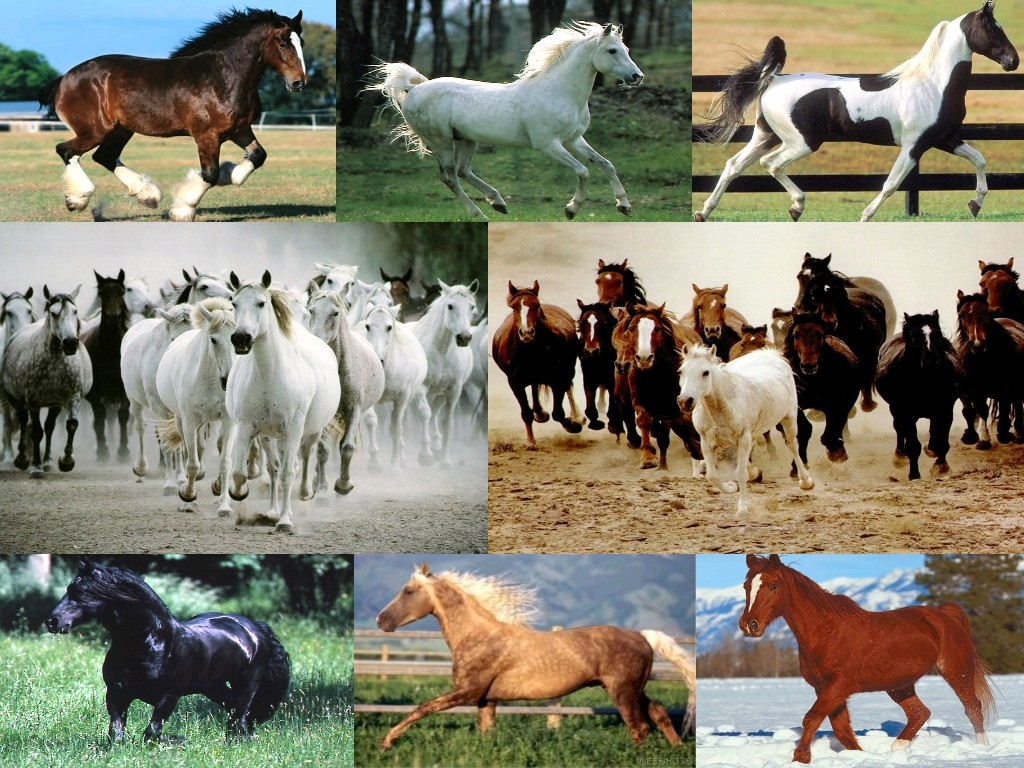 peinture chevaux wallpaper - photo #30