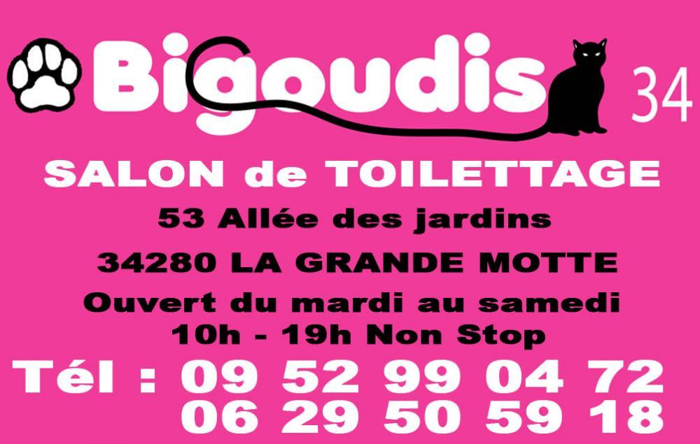 Bigoudis34 salon de toilletage la grande motte for Salon de coiffure la grande motte
