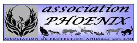 Association PHOENIX - Chats, chiens à adopter