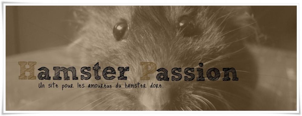 Le hamster doré