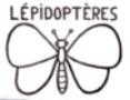 Papillons - Lépidoptères