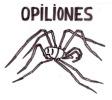 Opiliones