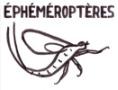 Ephéméroptères