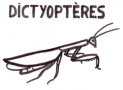 Dictyoptères