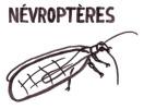 Névroptères