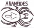 Aranéides
