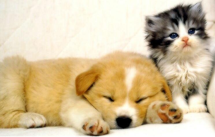 association de secours, protection des animaux de compagnie et de lutte contre le vol et le trafic de chiens et chats.