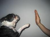 Comportement canin 06 et 83
