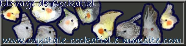 Élevage de Cockatiel