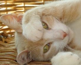Les Chats de Limeil