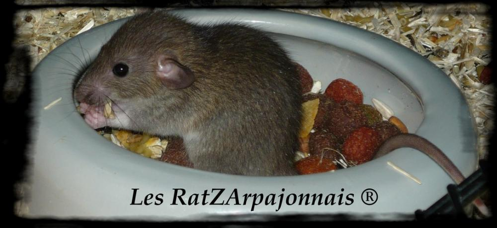 Les RatzArpajonnais