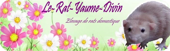 Le-Rat-Yaume-Divin