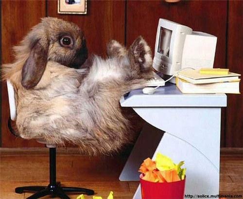 Fonds D'écran Rigolos. lapin, poule et et animaux de