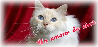 Un amour de Chat